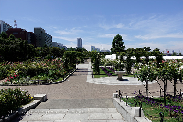 バラ園広角端撮影例